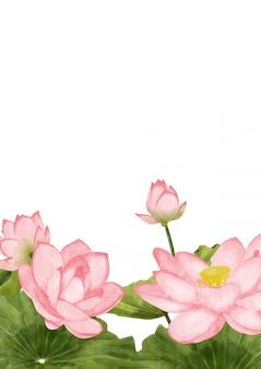 Fond de lotus aquarelle