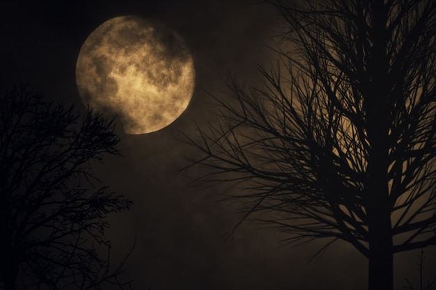 Fond de lune fantasmagorique. silhouette d'arbre. grande pleine lune se bouchent. laps de temps. illustration 3d de ciel nocturne