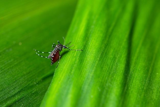 Fond macro moustique sur feuille