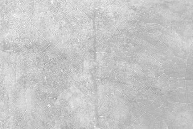 Fond macro texturé feuille de groseille étoile grise