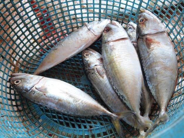 Fond de maquereau cheval de mer poisson frais