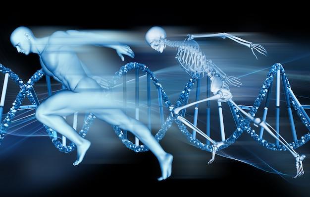 Fond médical 3d avec figure masculine et squelette sprintant sur des brins d'adn