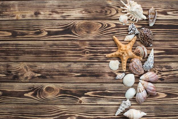 Fond de la mer. coquillages sur un fond en bois. image plate de nature morte d'été
