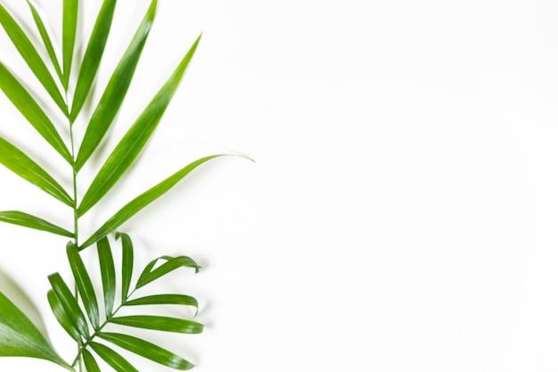 Fond minimaliste avec des feuilles vertes sur blanc