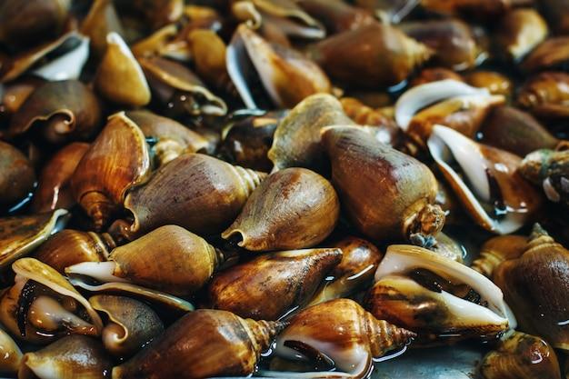 Fond avec des mollusques sur un marché frais