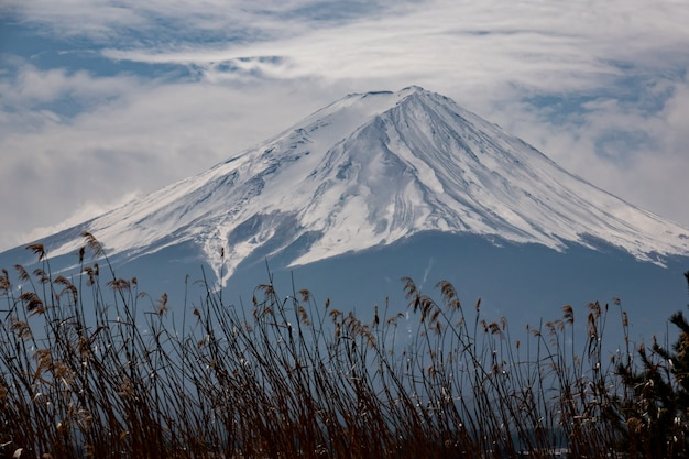 Fond de montagne fuji avec l'herbe des prés dorés
