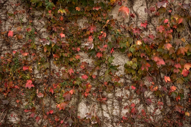 Fond de mur en béton avec végétation