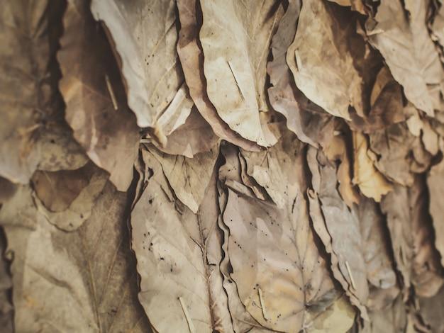 Fond de mur de feuilles séchées (feuilles de teck).
