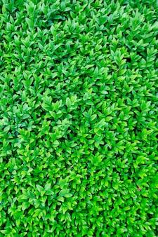 Fond de mur de feuilles vertes naturelles