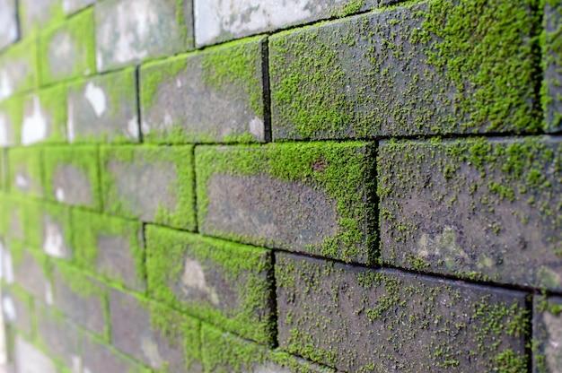 Fond de mur de mousse