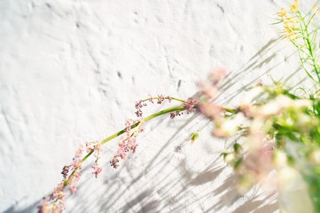 Fond d'un mur texturé blanc et une branche floue