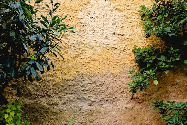 Fond de mur avec texture et plantes