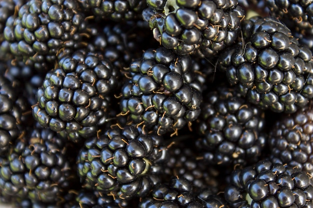 Fond de mûres fraîches, gros plan. beaucoup de baies brutes de fruits sauvages juteux mûres sur la table.