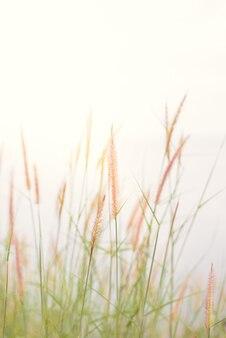 Fond de nature abstraite avec de l'herbe dans le pré