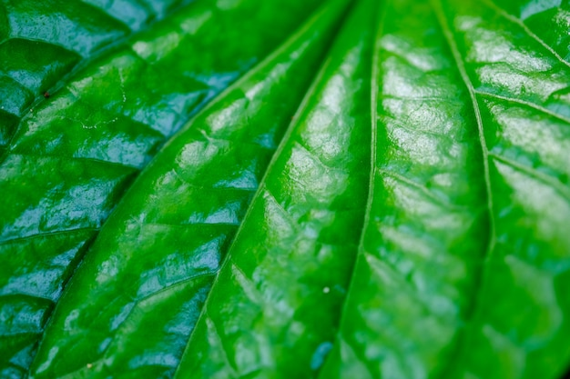 Fond de nature feuille verte texture nature.
