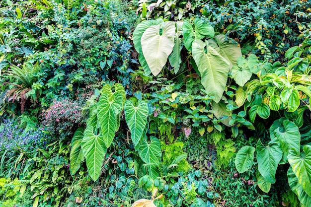 Fond de nature avec feuille verte tropicale