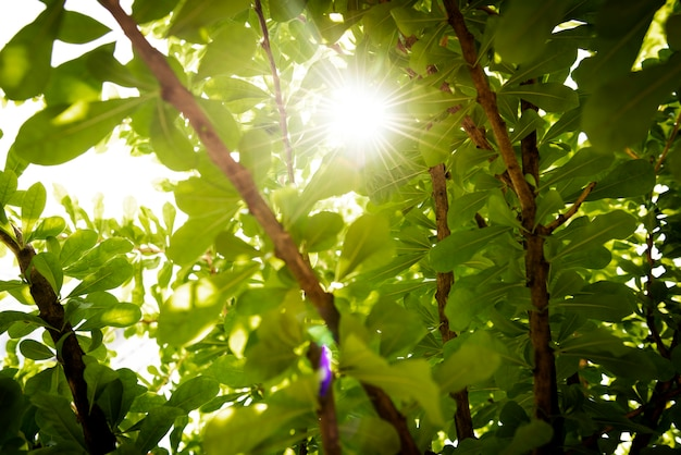 Fond de nature forêt verte avec la lumière du soleil qui brille