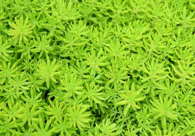Fond de nature fraîche vert fougère