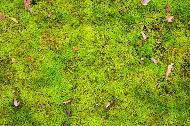 Fond de nature mousse verte avec des feuilles sèches