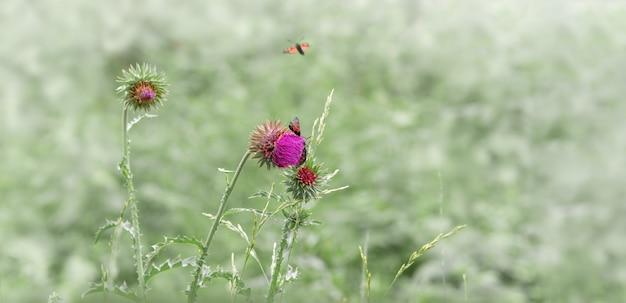 Fond de nature avec des papillons noirs sur prairie.