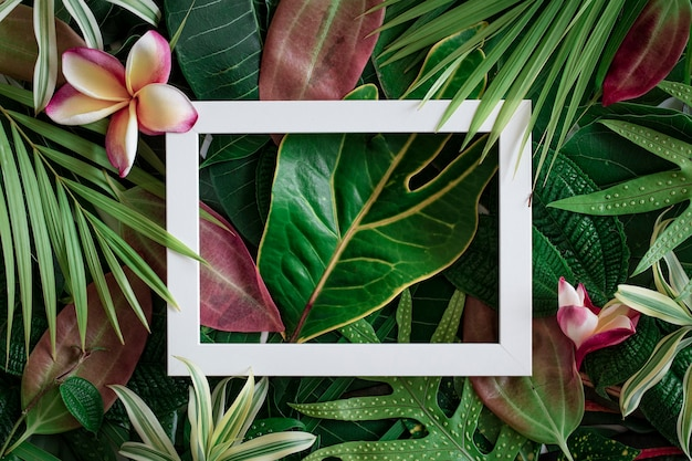 Fond de nature tropicale de feuilles et de fleurs de frangipanier avec cadre blanc au milieu