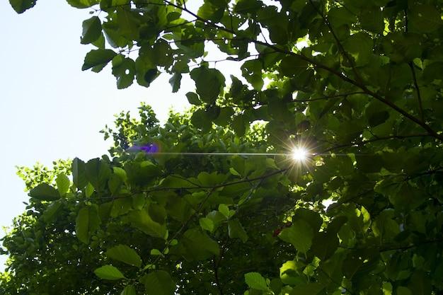 Fond naturel avec des branches d'arbres et la lumière du soleil