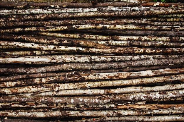 Fond naturel du vieil arbre