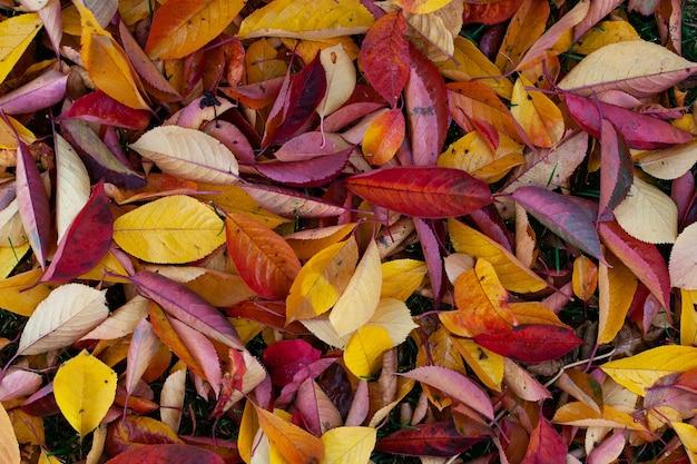 Un fond naturel de feuilles d'automne lumineuses tombées au sol une vue de dessus d'orange rouge jaune et ...