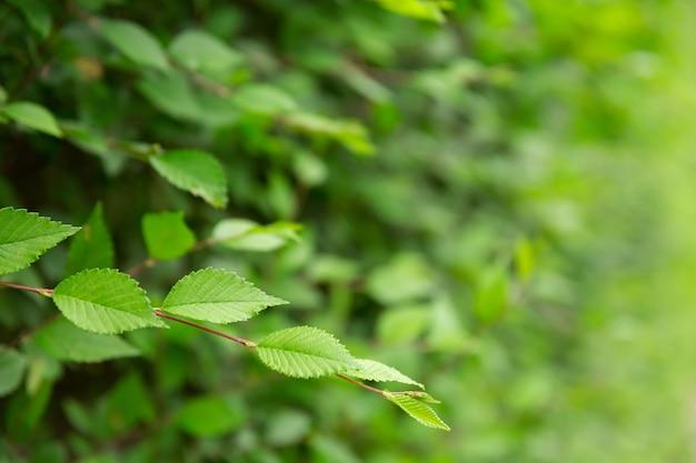Fond naturel. les feuilles se bouchent la saison estivale