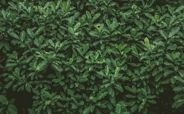 Fond naturel de feuilles vertes avec filtre vintage