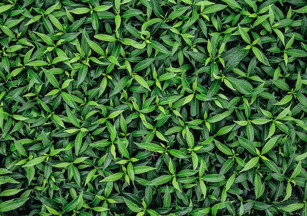 Fond naturel de feuilles vertes