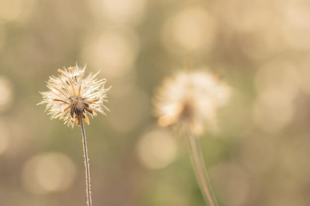 Fond naturel de fleurs d'herbe