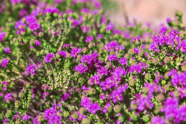 Fond naturel floral.