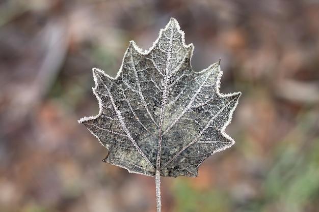 Fond naturel avec gros plan de feuille congelée brune.