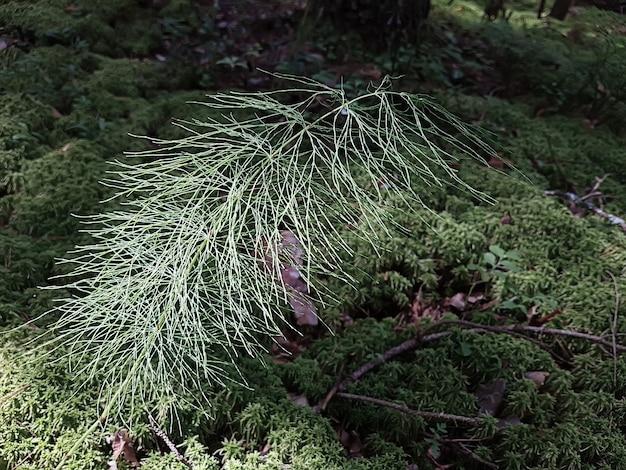 Fond naturel avec de l'herbe de mousse fraîche et des brindilles. concept de fond, nature.
