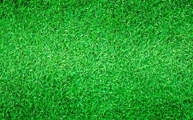 Fond naturel de l'herbe verte smal