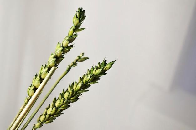 Fond naturel laisse fleurs plantes