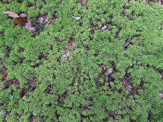 Fond naturel avec de la mousse fraîche et des brindilles. concept de fond, nature.
