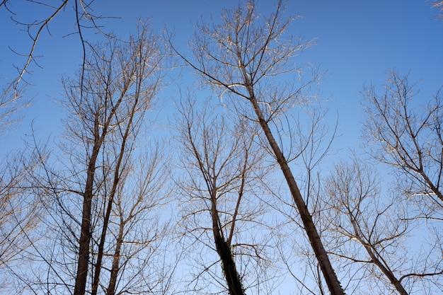 Fond naturel avec des silhouettes d'arbres sans feuilles en hiver avec un ciel bleu.
