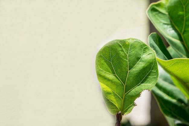 Fond naturel de vert clair résumé flou