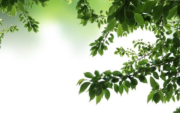 Fond naturel vert, fond de verdure