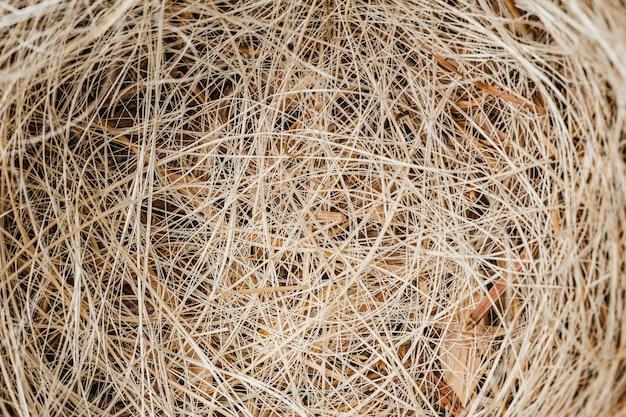 Fond de nid vue de dessus