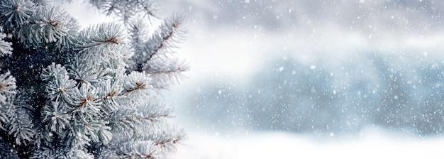 Fond de noël et du nouvel an avec des branches d'épinette enneigées sur un arrière-plan flou lors d'une chute de neige, panorama, espace de copie