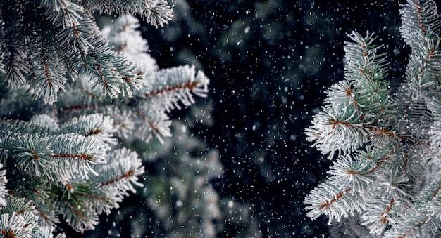 Fond de noël et du nouvel an avec des branches d'épinette enneigées sur fond sombre pendant les chutes de neige