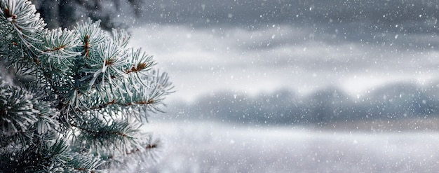 Fond de noël et du nouvel an avec des branches d'épinette sur fond de paysage nuageux lors d'une chute de neige