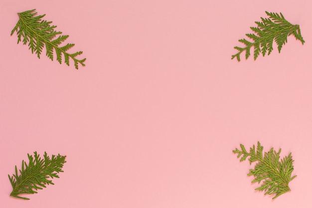 Fond de noël festif, branches de sapin sur fond rose, mise à plat, vue du dessus