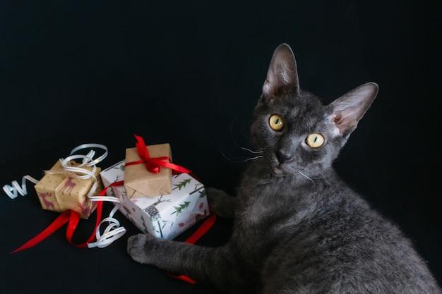 Sur un fond noir se trouve un chat gris et les cadeaux de noël sont emballés dans du papier cadeau et attachés avec des rubans et des cordes. préparer la nouvelle année