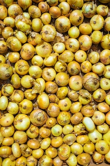 Fond d'oignon blanc mûr récolté