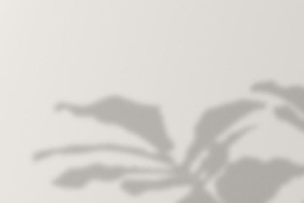 Fond avec l'ombre d'un arbre de monstera