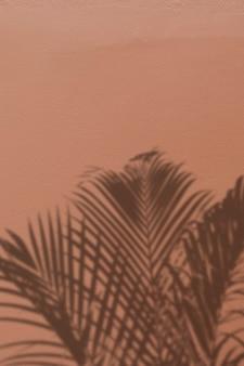 Fond avec l'ombre d'un palmier